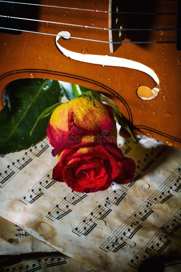 小提琴活页乐谱和上升了 免版税图库摄影