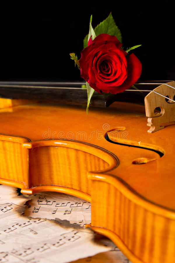 小提琴活页乐谱和上升了 库存图片