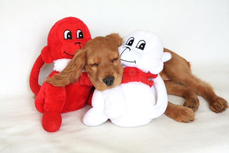 小斗鸡家狗英国西班牙猎狗玩具 免版税库存图片