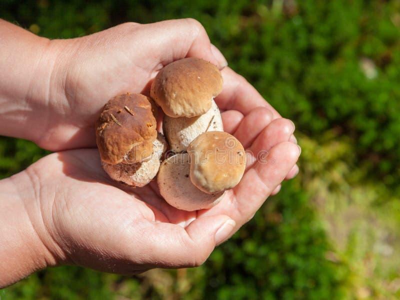 小新鲜的蘑菇 免版税图库摄影