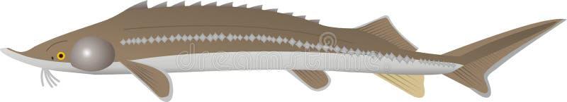 小明星鱼蝶鲛属ruthenus 向量例证