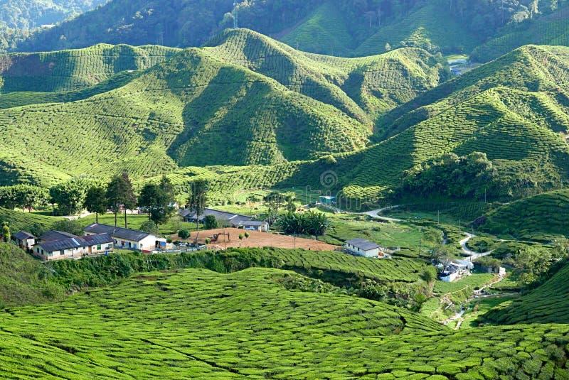 小村庄风景庄严看法金马仑高原彭亨马来西亚的茶园谷的  免版税库存图片