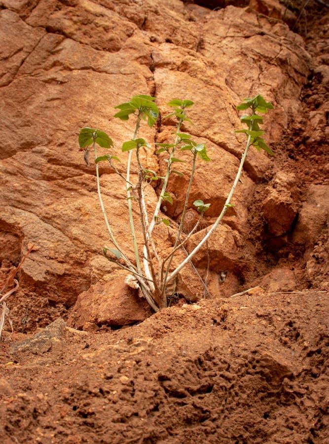 小树被隔绝的生长在具体孔 免版税库存图片