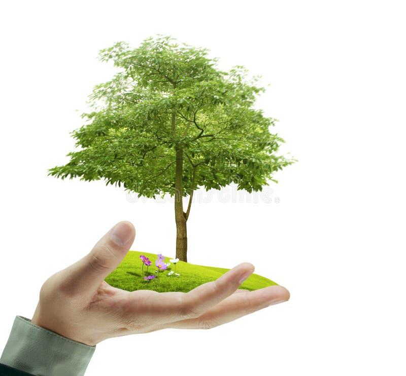 小树,植物在手中 库存图片