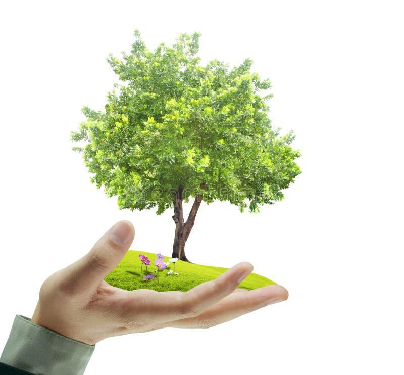 小树,植物在手中 免版税库存图片