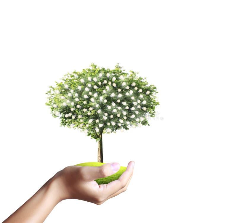小树,植物在手中 免版税库存照片