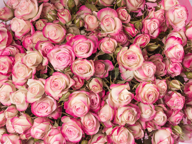 小桃红色玫瑰花束关闭 免版税库存图片