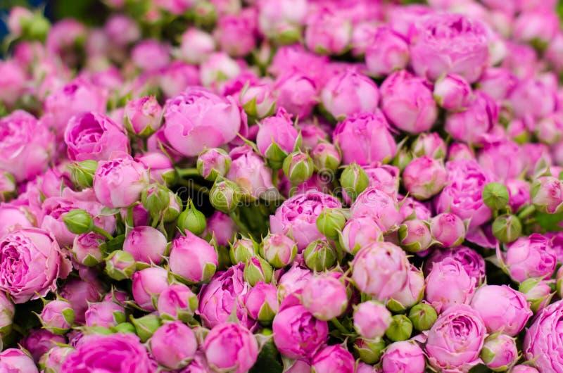 小桃红色玫瑰花束关闭 E 库存照片