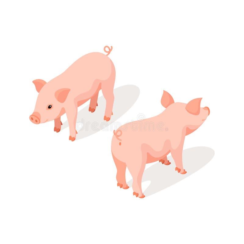 小桃红色逗人喜爱的猪的等量3d传染媒介例证 库存例证
