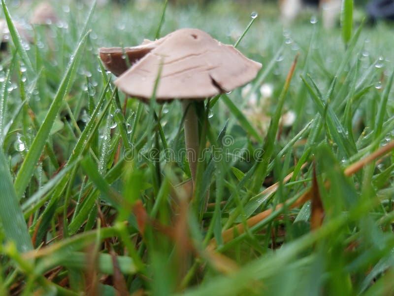 小棕色蘑菇 库存照片