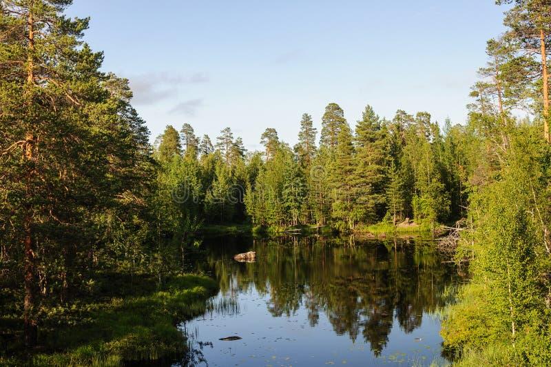 小森林湖在卡累利阿 图库摄影