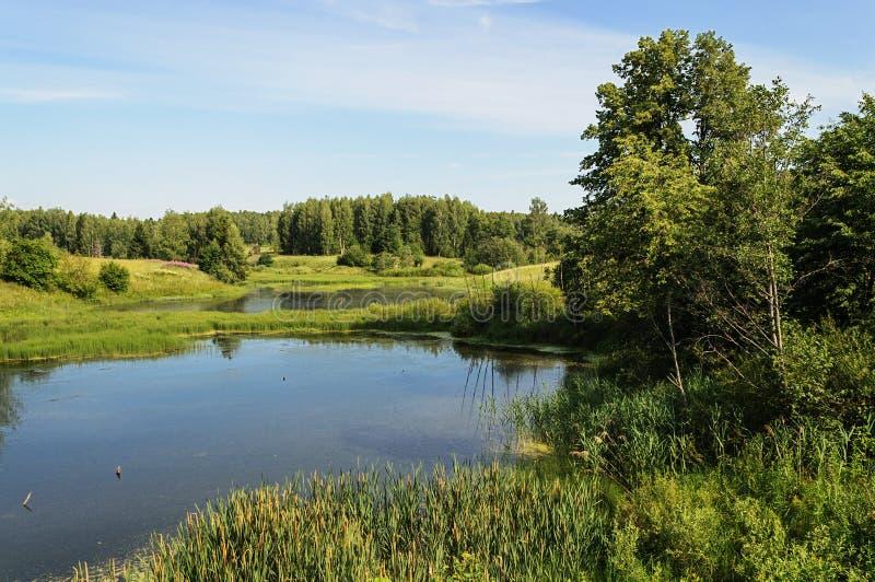 小森林湖在夏天 免版税库存照片