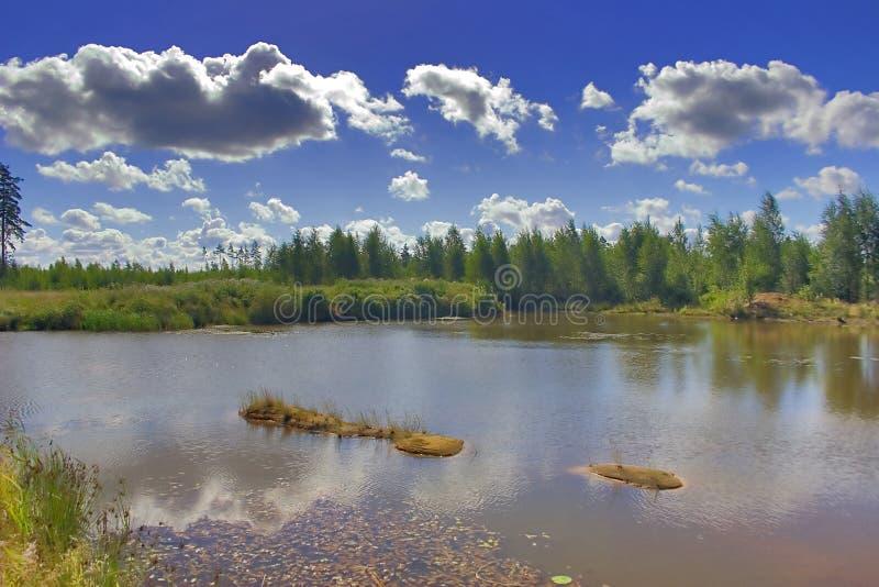 小森林的池塘 库存照片