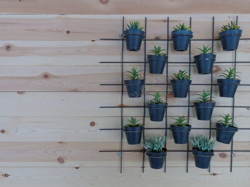 小植物垂直的庭院黑花盆的在未加工的木背景的方形的样式 库存照片
