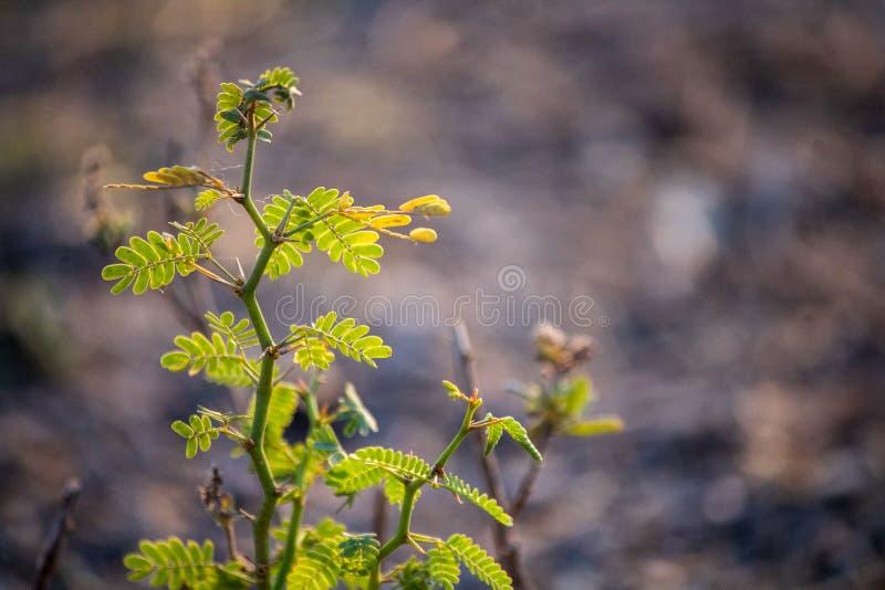 小植物绿色 免版税图库摄影