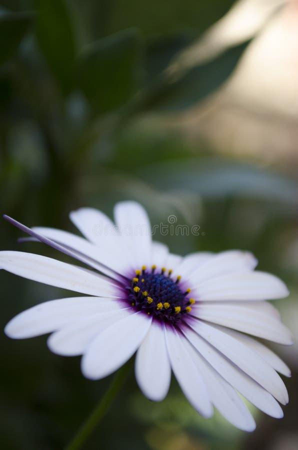 小植物,狂放 免版税图库摄影
