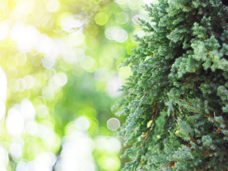 小植物绿色叶子垂直的庭院的 库存图片