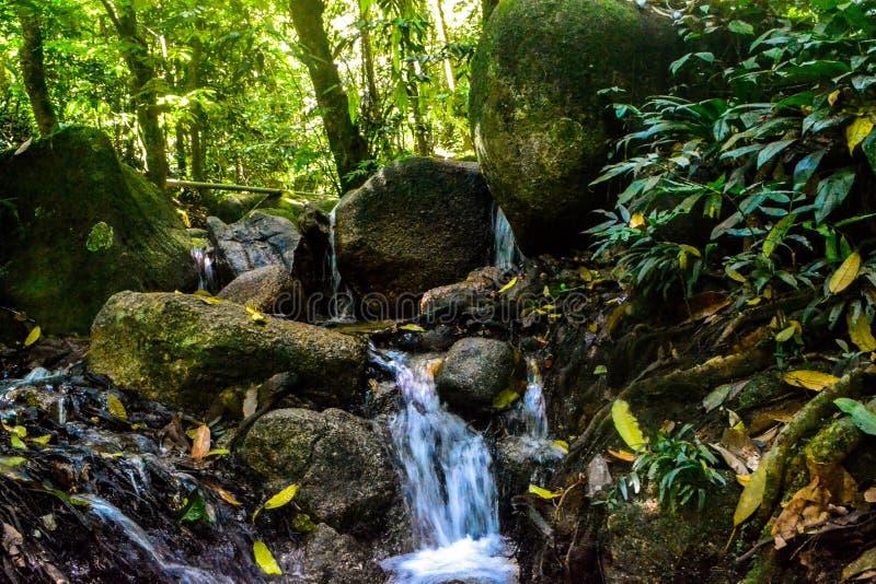 小水小河在活泼的森林里 库存照片