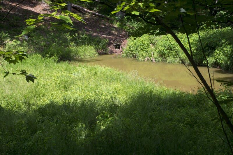 小池塘在草甸 免版税库存图片