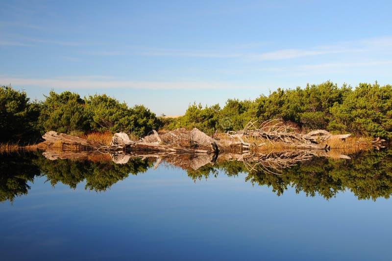小池塘的反映 免版税库存照片