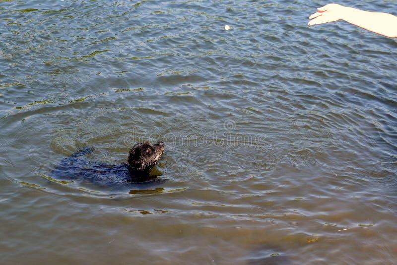小沮丧游泳在aport的水中 免版税库存照片