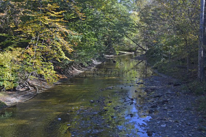小河切口通过在树和下木中的森林 免版税库存照片
