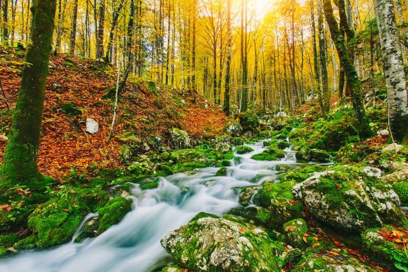 小河华美的场面在五颜六色的秋季森林里 免版税库存照片