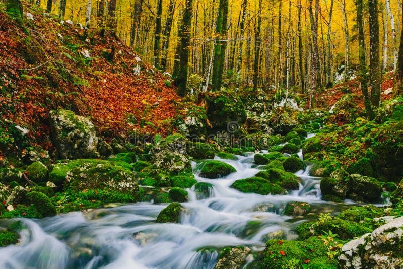 小河华美的场面在五颜六色的秋季森林里 免版税图库摄影