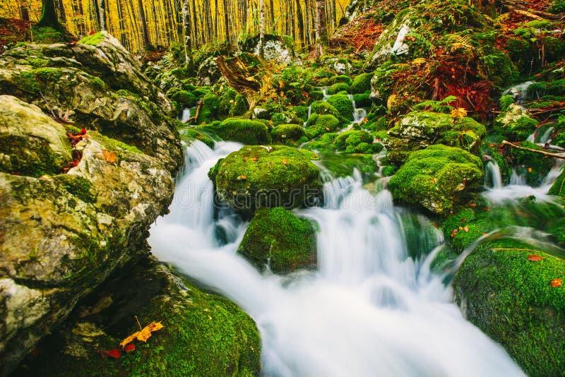 小河华美的场面在五颜六色的秋季森林里 库存照片
