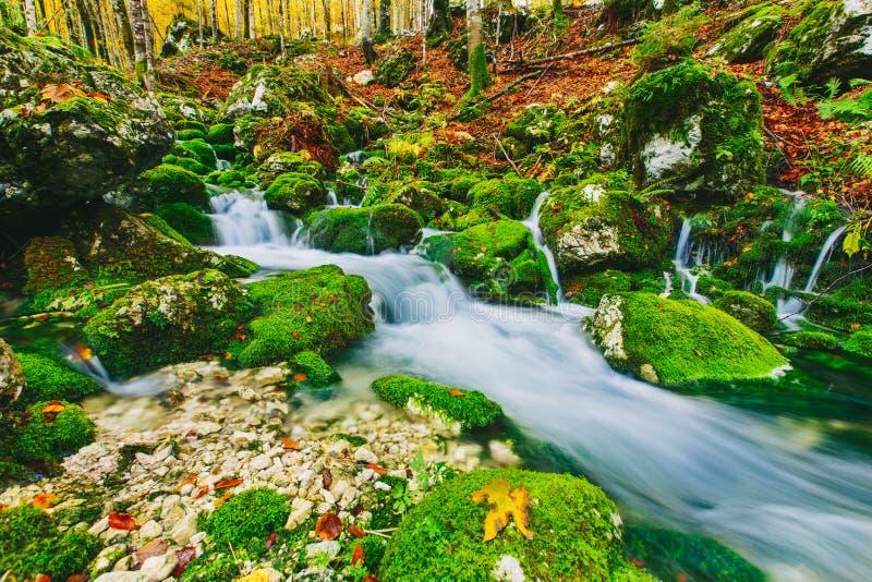 小河华美的场面在五颜六色的秋季森林里 图库摄影