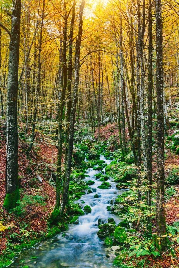 小河华美的场面在五颜六色的秋季森林里 库存图片