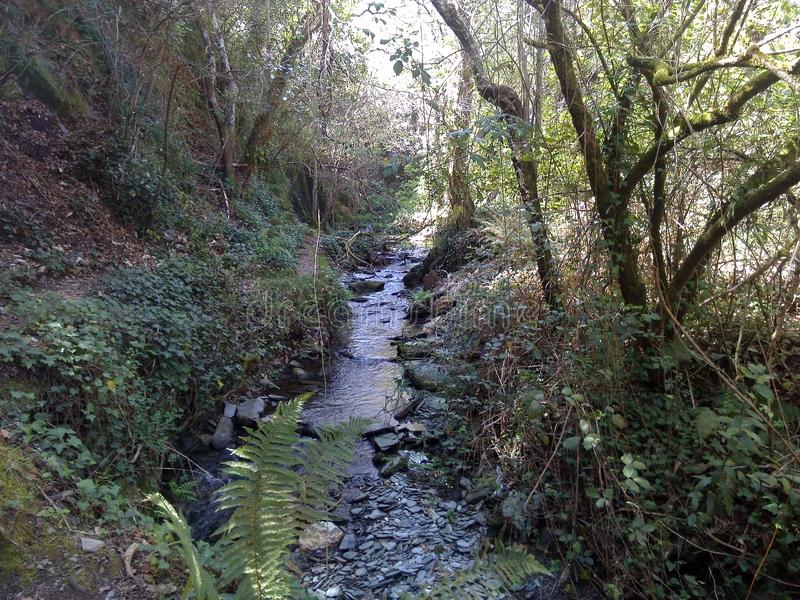 小河在不可思议的森林里 库存图片