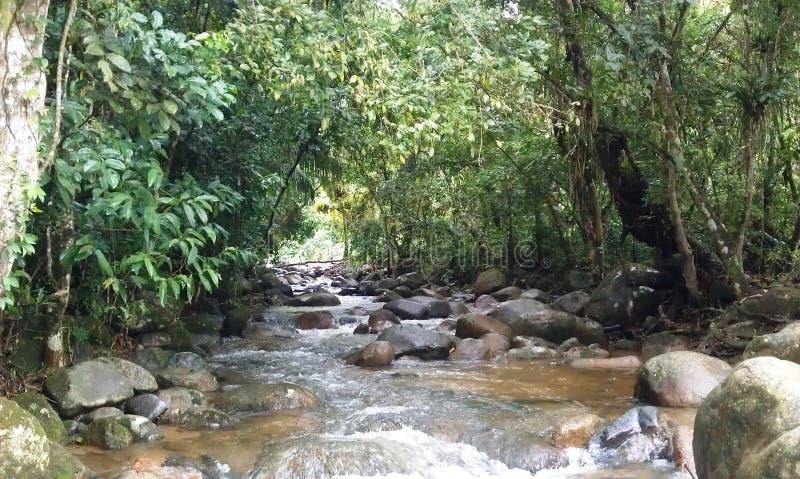 小河在伊瓜苏密林 免版税库存图片