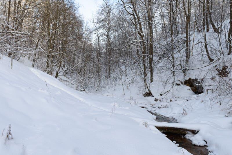 小河在冬天森林里 图库摄影