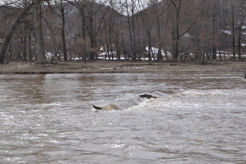 小河在动荡河 免版税库存照片