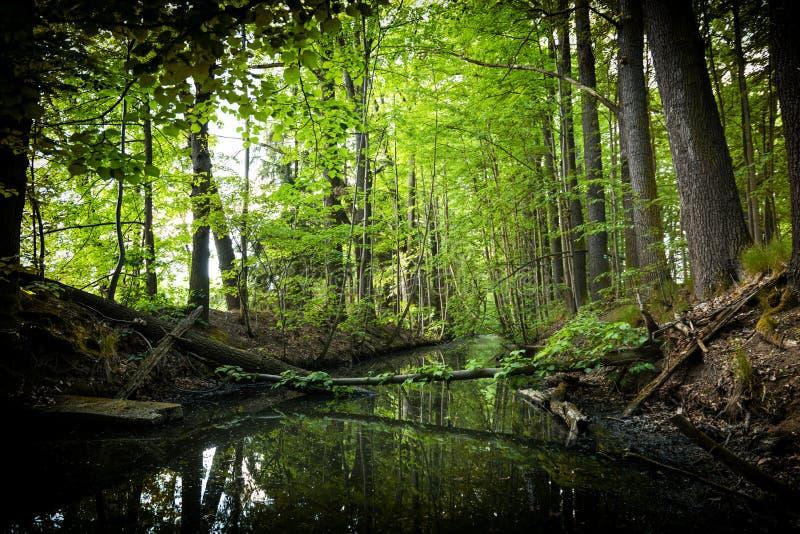小河在夏天森林里 图库摄影