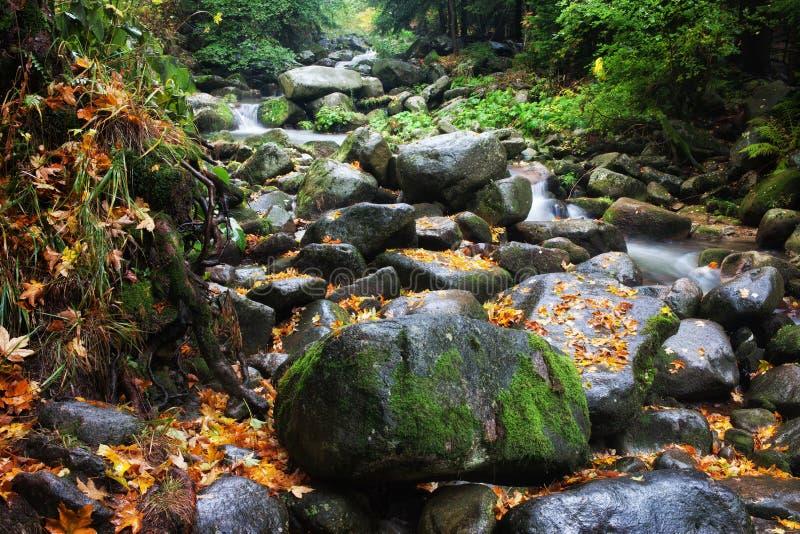 小河在山森林原野 库存图片