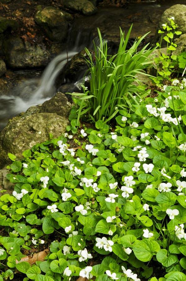 小河在春天附近开花 图库摄影
