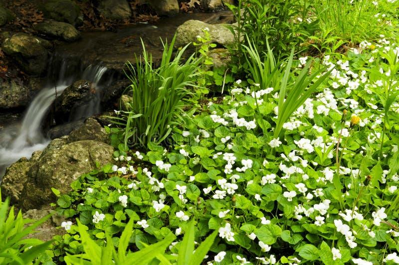 小河在春天附近开花 免版税图库摄影