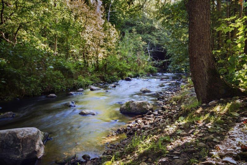 小河在有石头和小河急流的森林里,光滑 库存照片