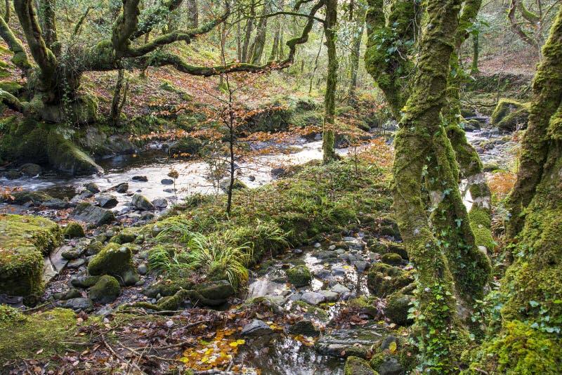 小河在森林地 库存图片