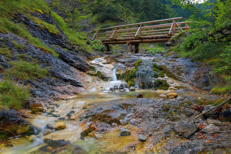 小河在森林-长的风险里 免版税库存照片