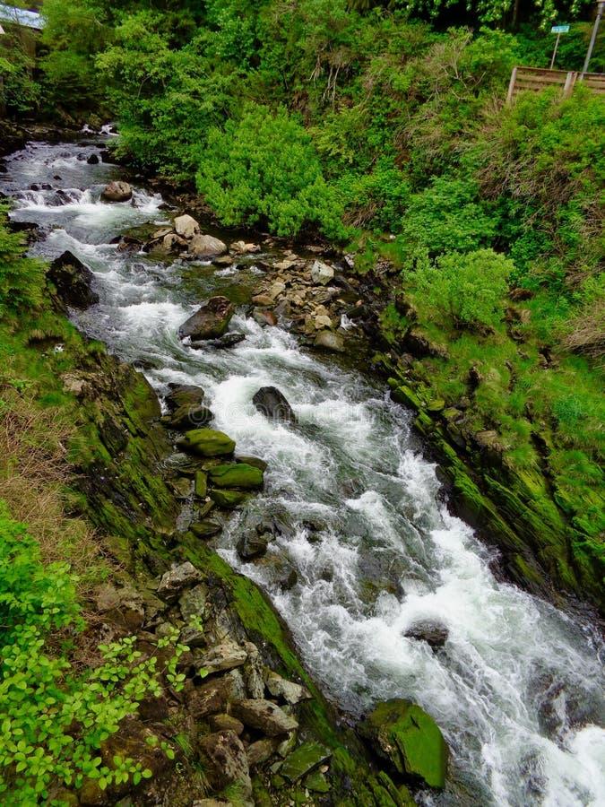 小河在阿拉斯加 库存图片