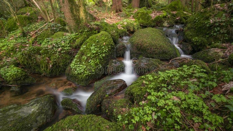 小河在Blackforest 免版税库存图片