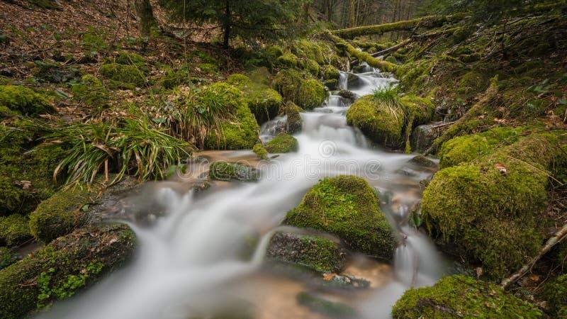 小河在Blackforest 库存照片