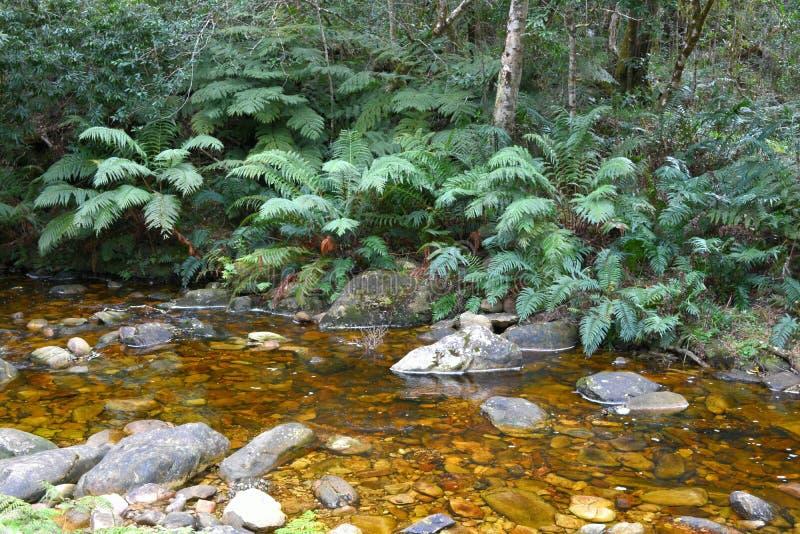 小河在Knysna森林,南非里 免版税库存图片