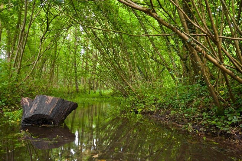 小河森林夏天 图库摄影