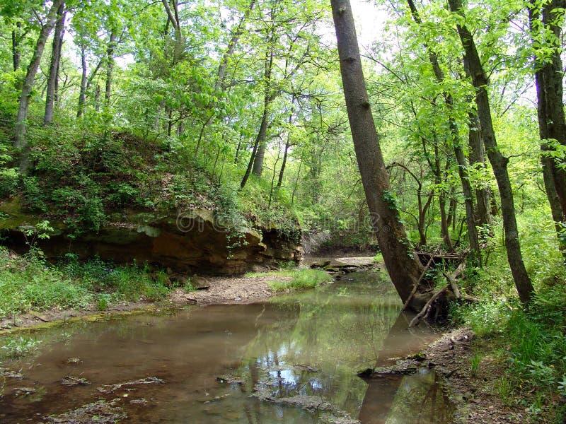 小河森林 库存图片