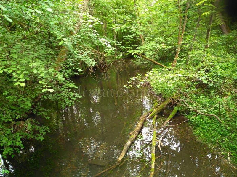 小河消失入不可思议的绿色 免版税库存照片