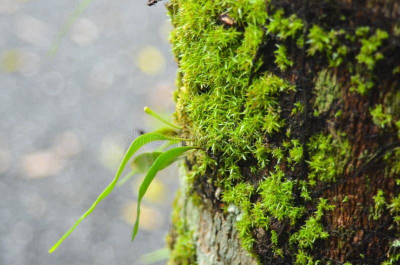小河用每两年花和蕨盖 库存照片